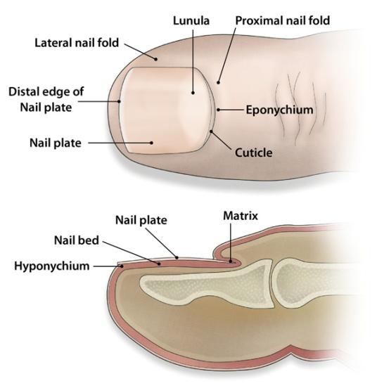 Tratamiento No Quirúrgico De La Uña Encarnada Clinica